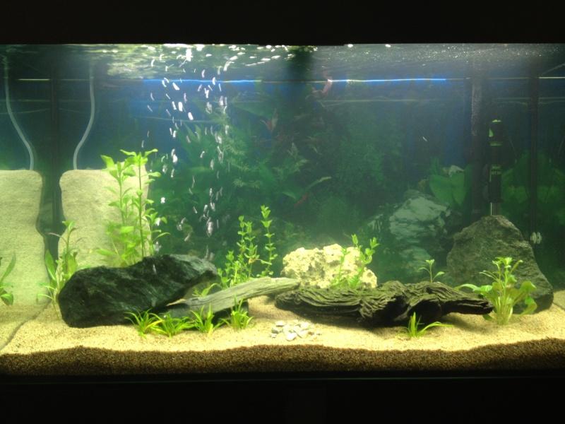 présentation  de mon aquarium  Img_0014