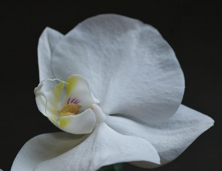 mon orchidée (ajout  8/01 ) P1096211
