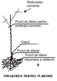 Plantarea Pomilor Fructiferi ! Planta10