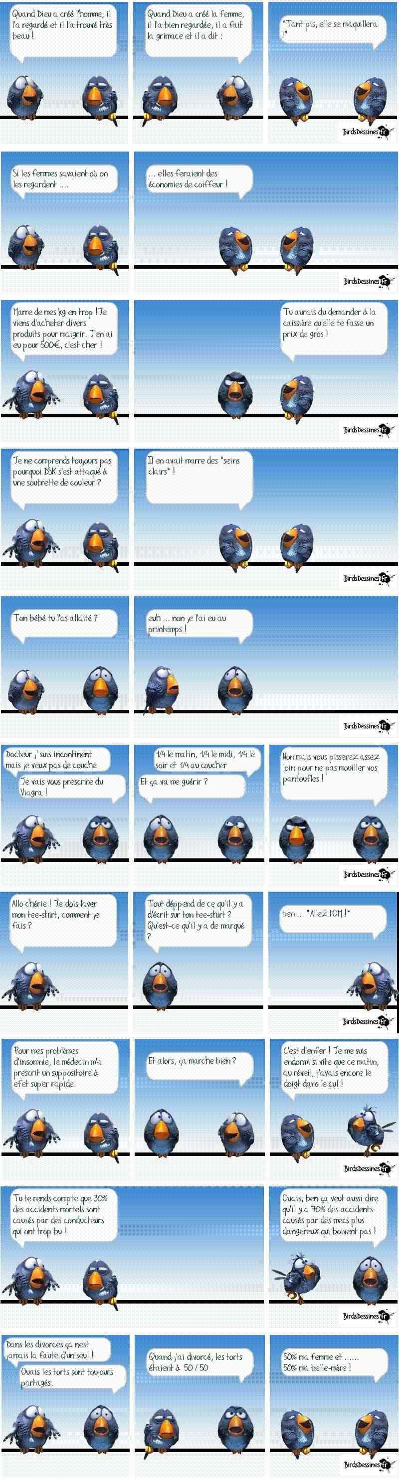 une petite blague :) - Page 9 Birds10
