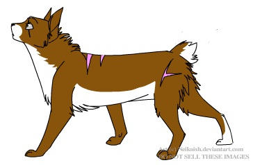 Brownclaw of ShadowClan Brownc10