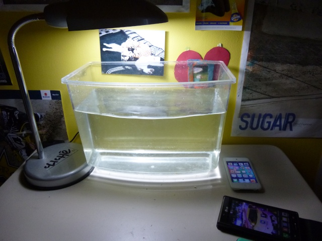 aquarium 8l betta P1020411