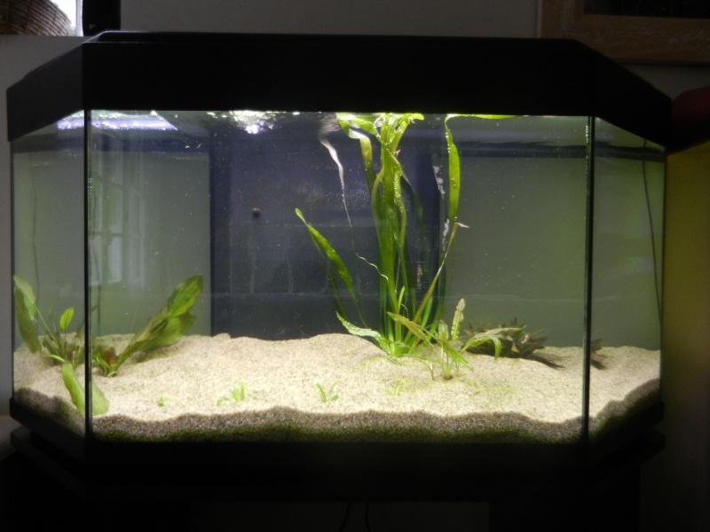 l'aquarium du crestois Dscn1011