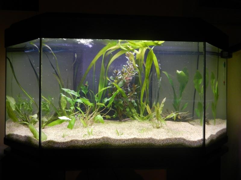l'aquarium du crestois Dscn1012