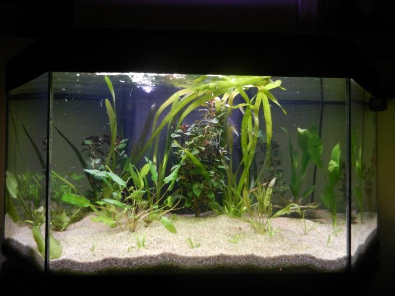 l'aquarium du crestois Dscn1013