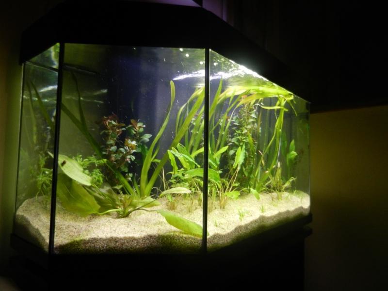 l'aquarium du crestois Dscn1014