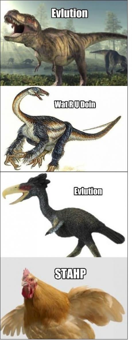 evolution Evluti10