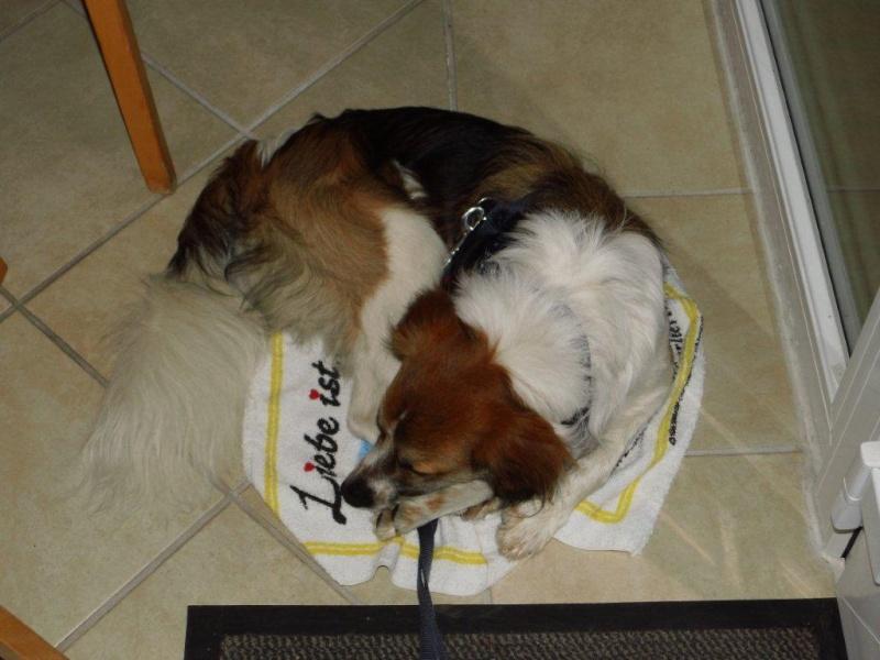 Vorstellung der Herzenshunde Dsci3210
