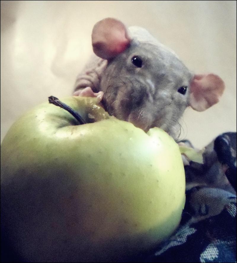 Les Hoop & Rats 2148910