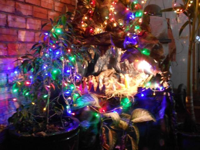 Một Số Hình Ảnh Đón Giáng Sinh 2012-Cập nhật liên tục 42565010