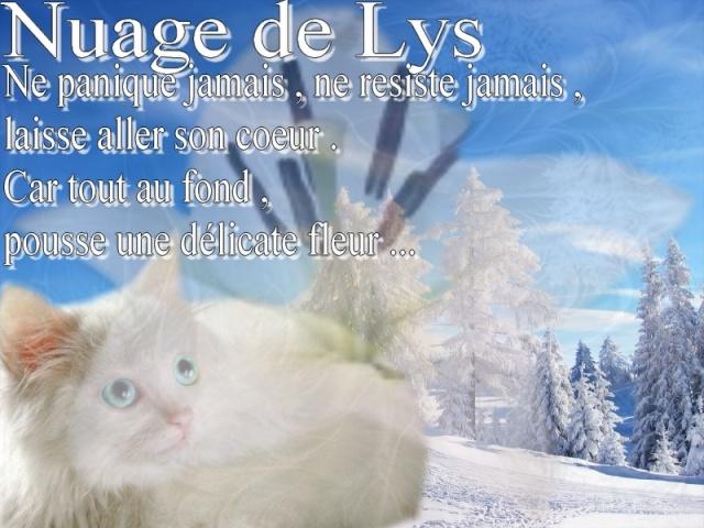 Atelier des beaux Lys [ O/2 ] Signat18