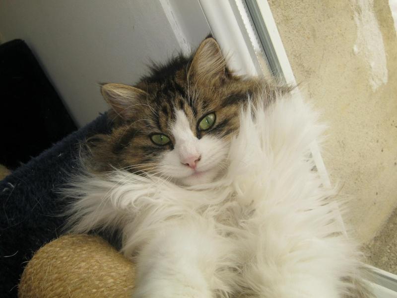 Au royaume des chats Fenua10