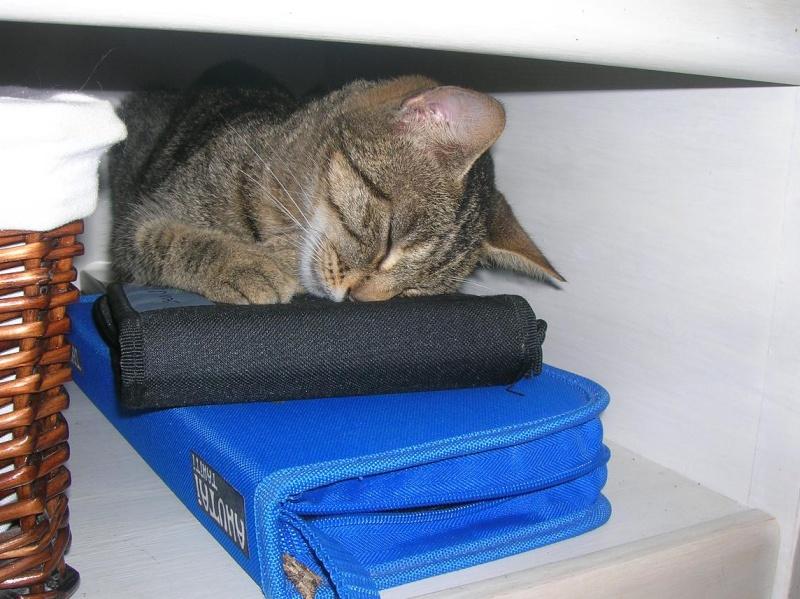 Au royaume des chats Tikie10
