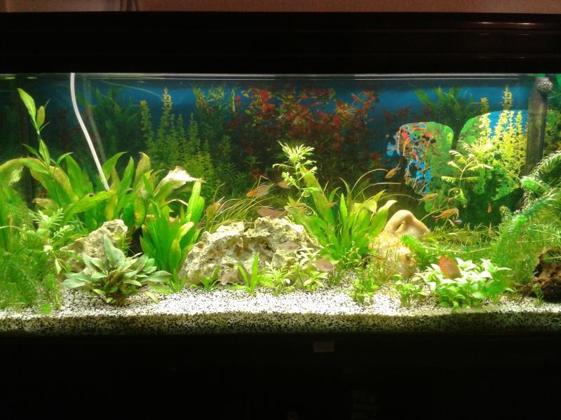 aquarium de 240l tommy 2013-010