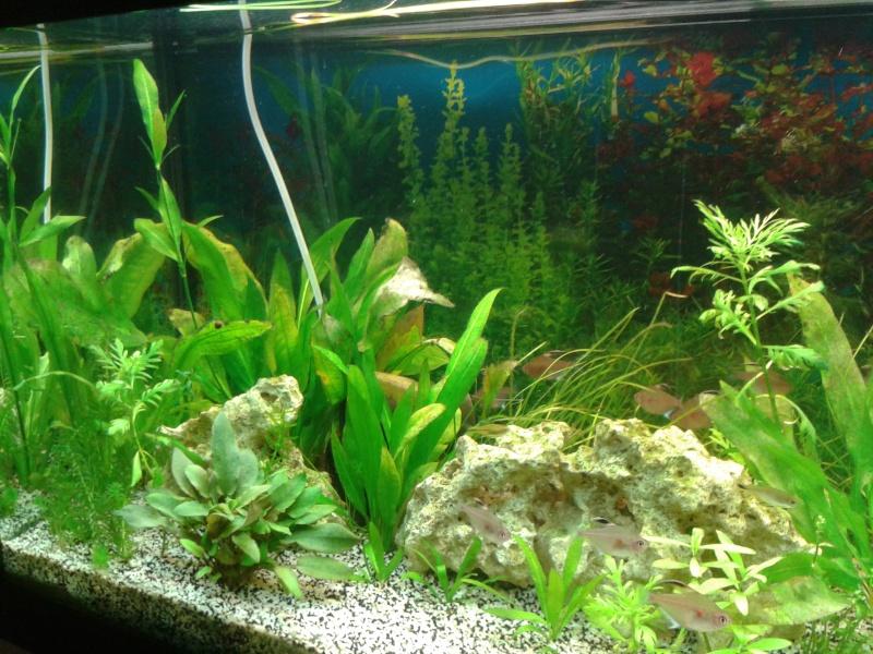 aquarium de 240l tommy 2013-013