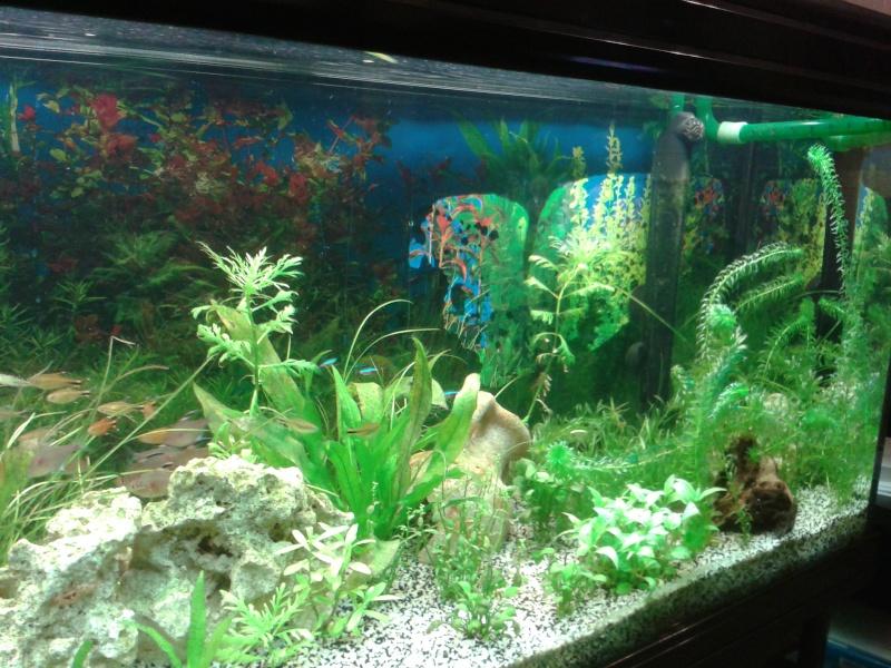 aquarium de 240l tommy 2013-014