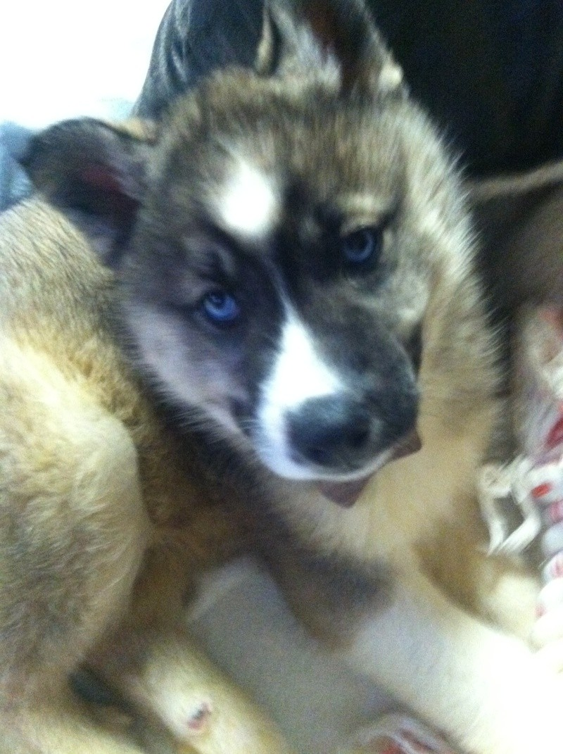 Koda and Nyx! Scrapbook! Updated 9/18/14 2013-013