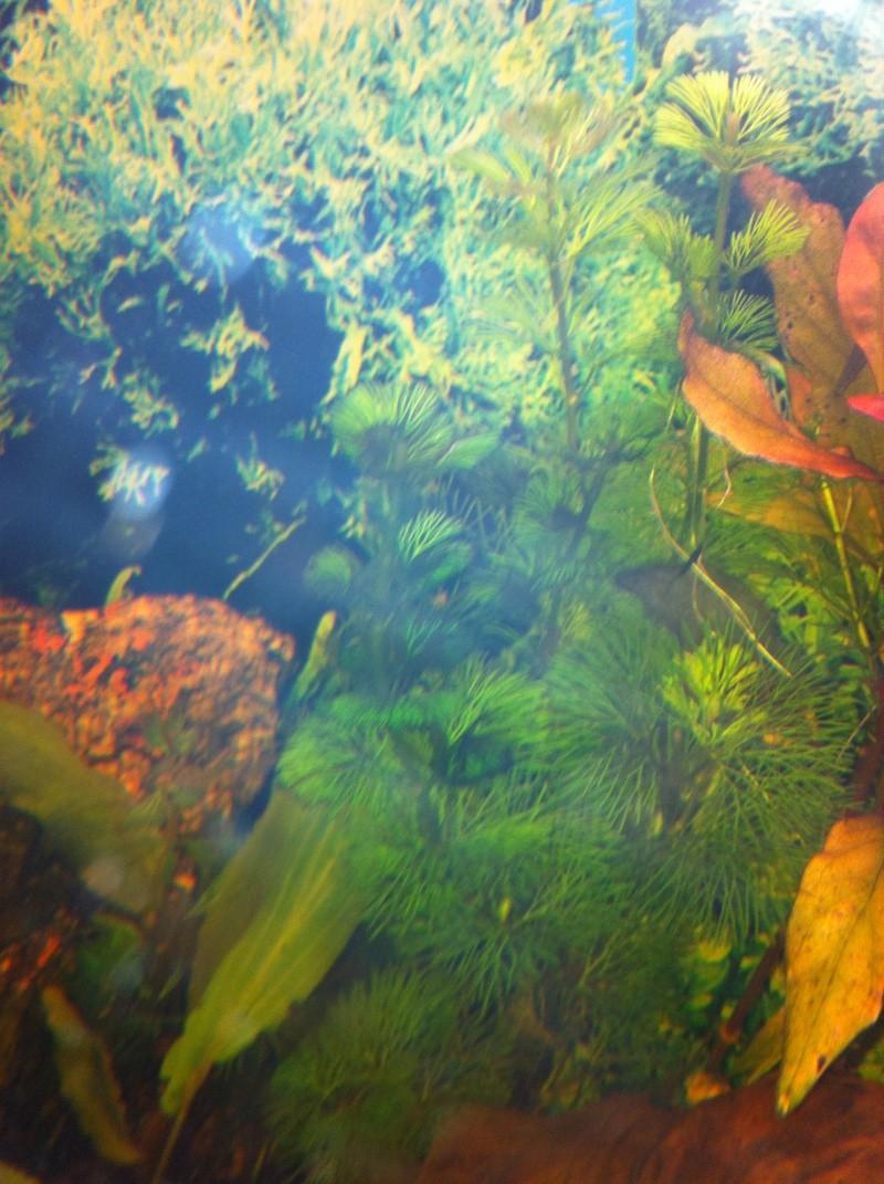 Mon aquarium - Page 2 Img_0416