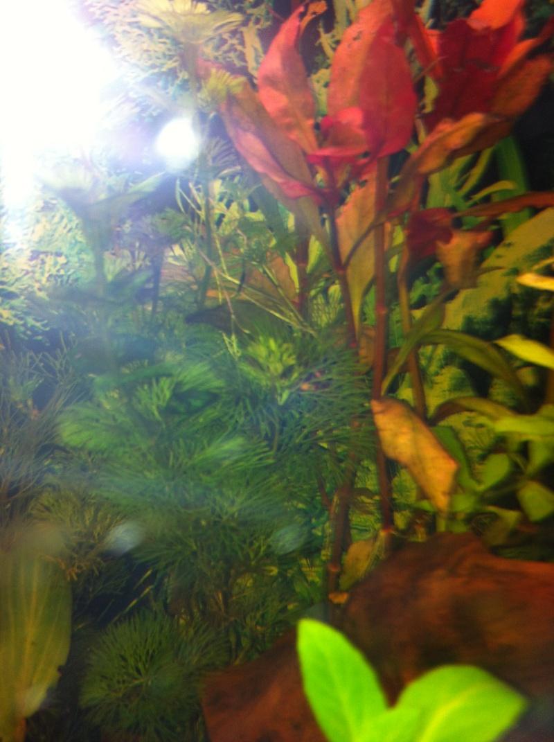 Mon aquarium - Page 2 Img_0417