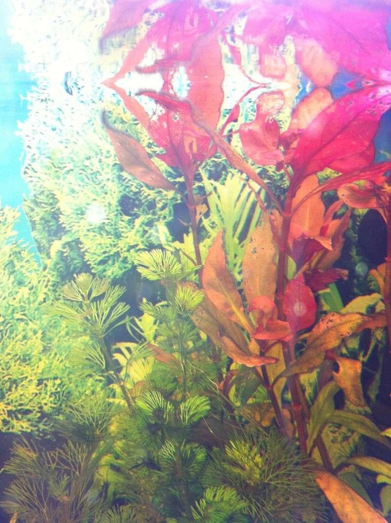 Mon aquarium - Page 2 Img_0420