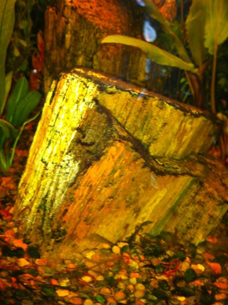 Mon aquarium - Page 2 Img_0421
