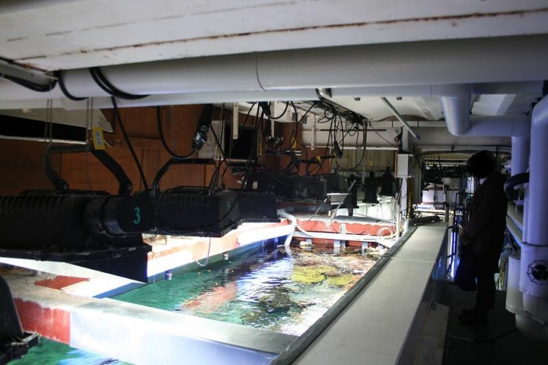 Aquarium de Monaco Amc010