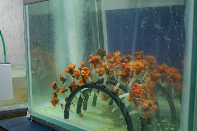 Aquarium de Monaco Amc1010
