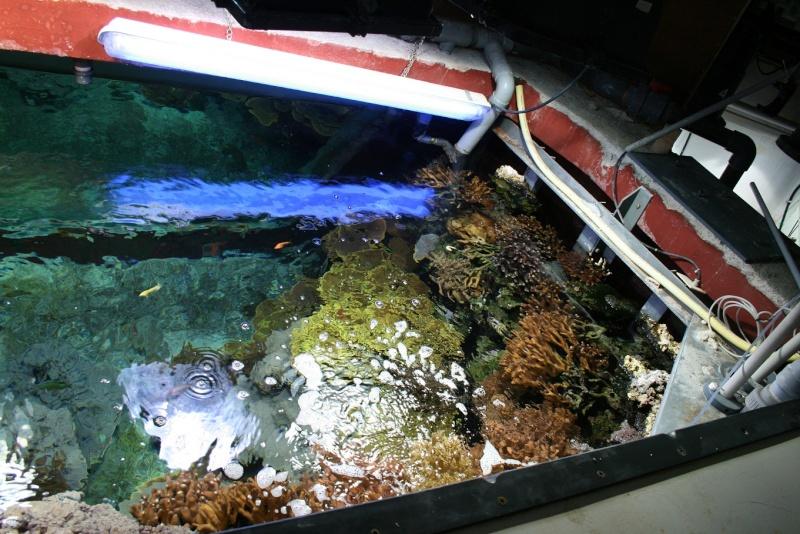 Aquarium de Monaco Amc113