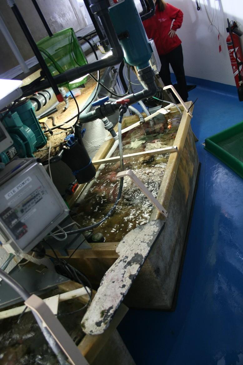 Aquarium de Monaco Amc510