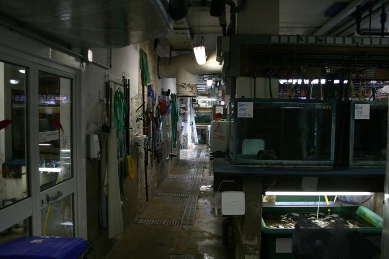 Aquarium de Monaco Amc610