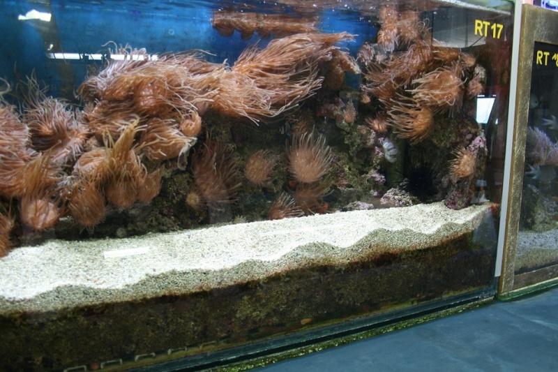 Aquarium de Monaco Amc710