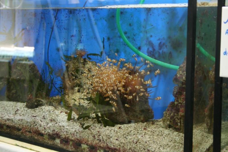 Aquarium de Monaco Amc810