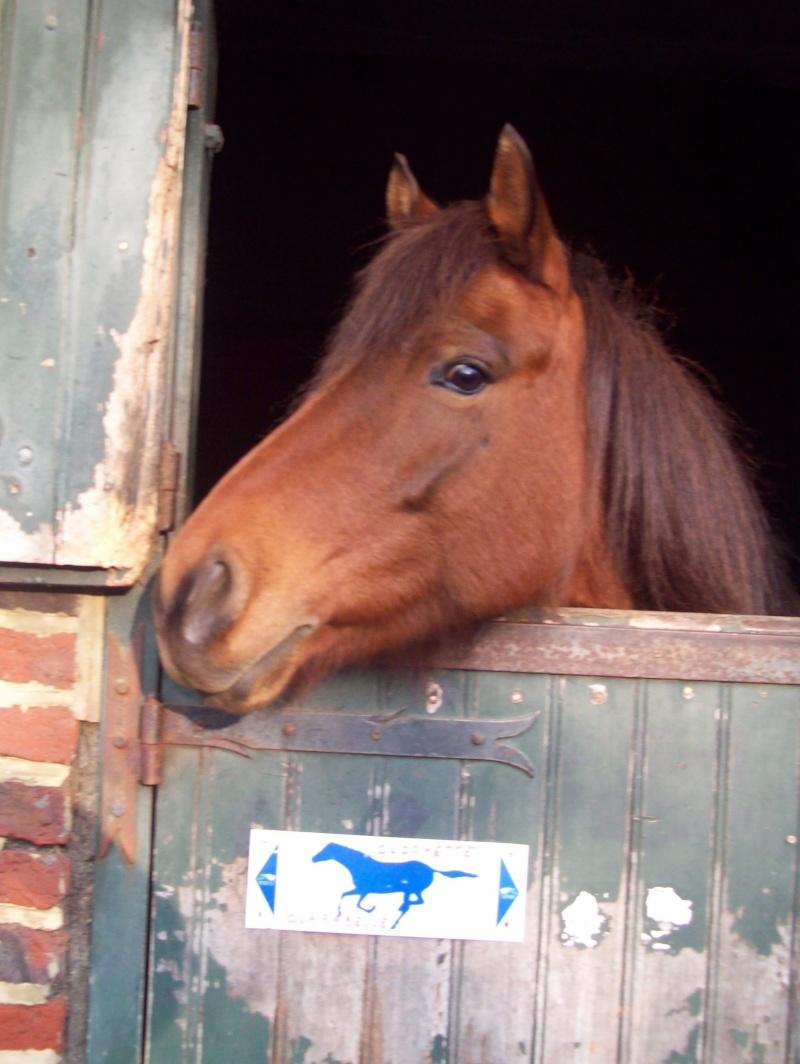 8 ans d'équitation..♥ 100_2010