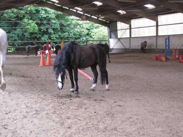 8 ans d'équitation..♥ Img_4310