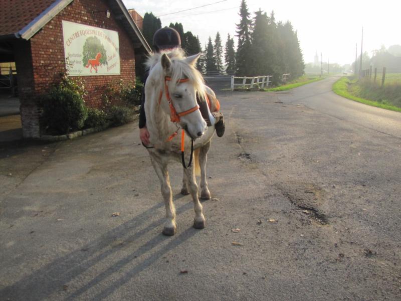 8 ans d'équitation..♥ Img_5911