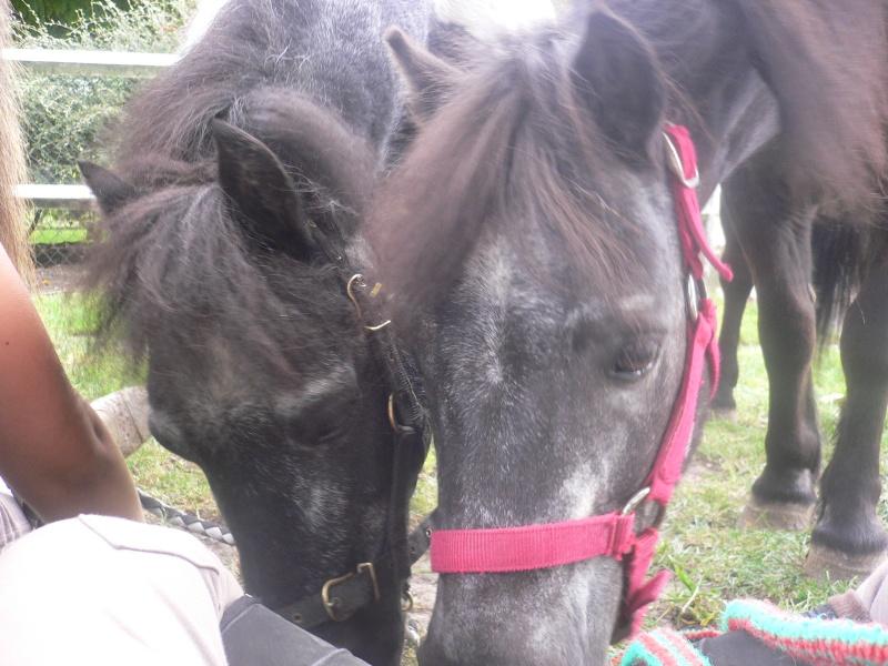 8 ans d'équitation..♥ P1030010