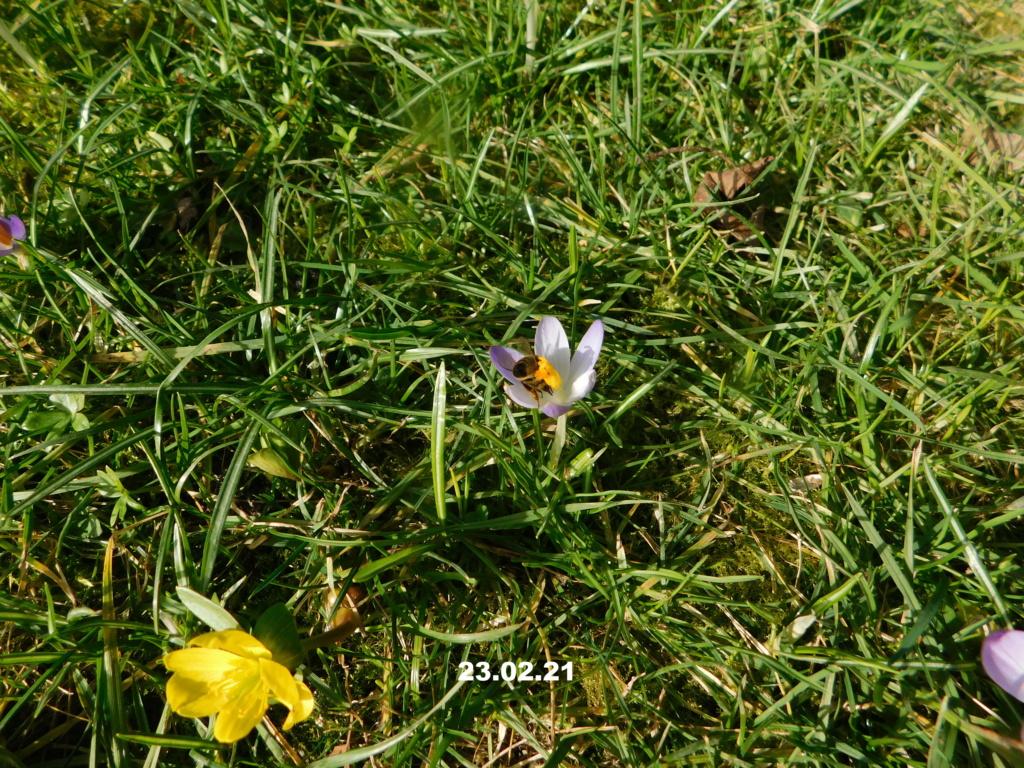 Erste Frühlingsboten im Garten und in Wald und Flur, Teil 2 - Seite 3 Wiese-17