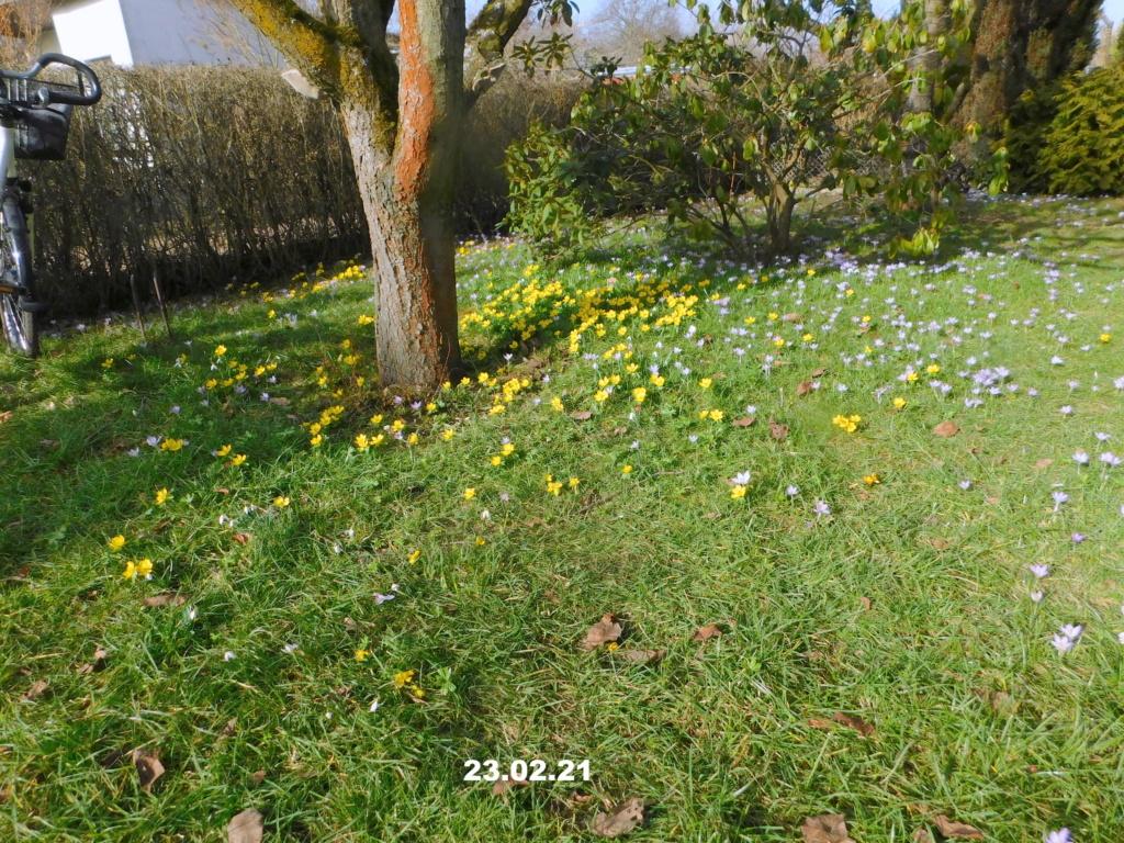Erste Frühlingsboten im Garten und in Wald und Flur, Teil 2 - Seite 3 Wiese211