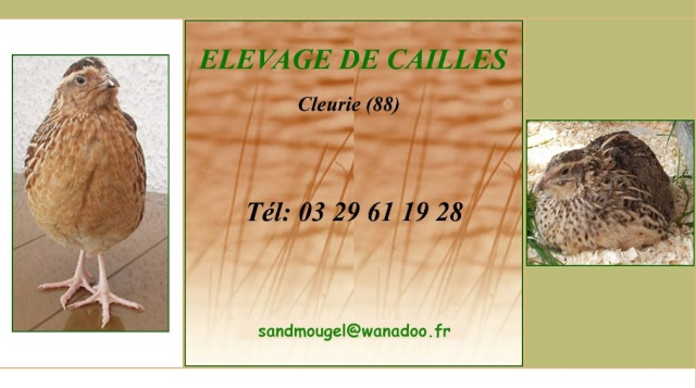 LA CAILLE DE CLEURIE 2013-010