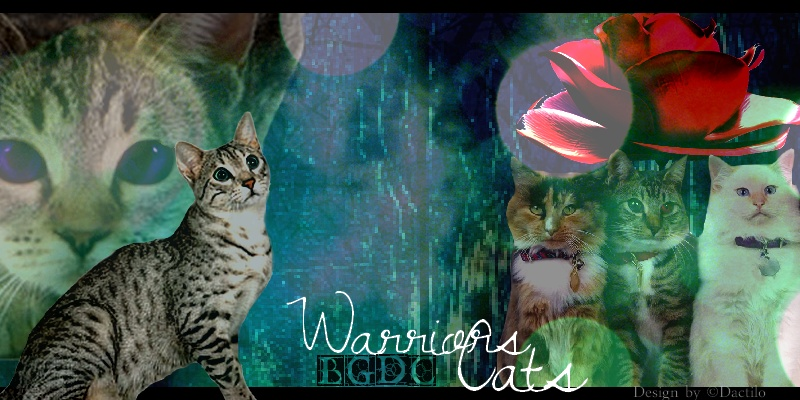 lgdc-Warriors Cats