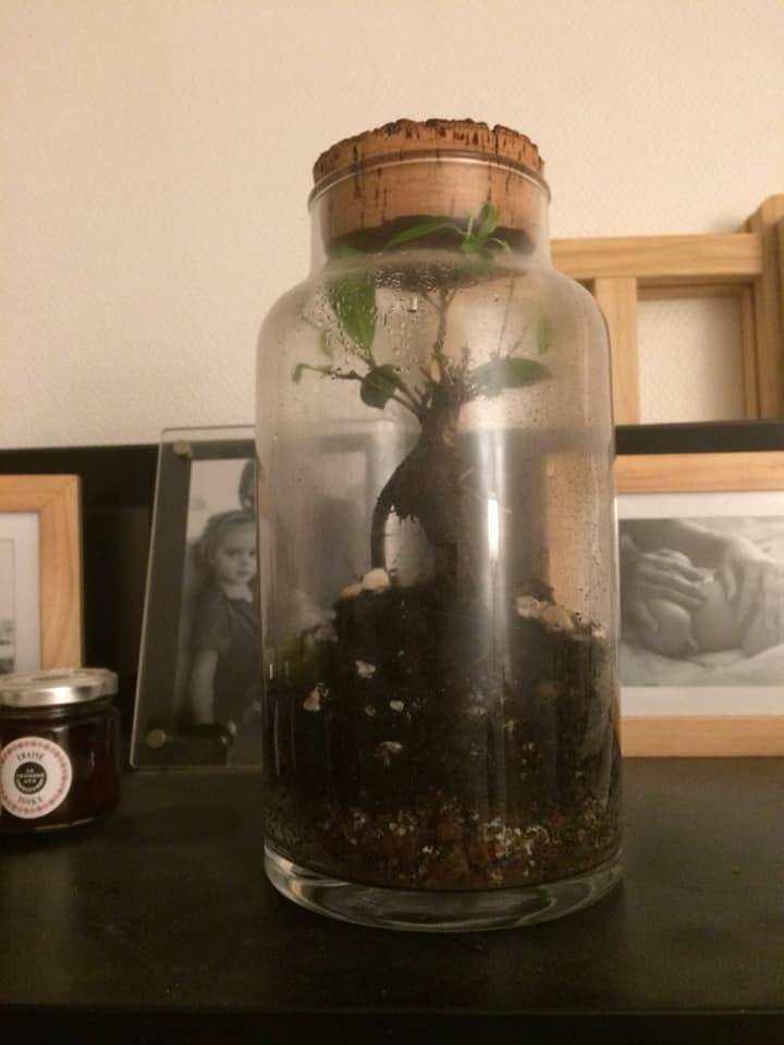 Le bonsaï pour les nuls... 49097810