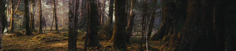 La Lothlórien