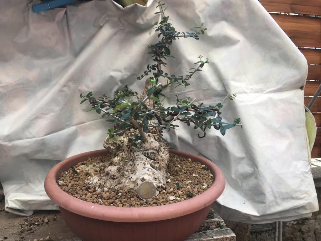 impostazione olivo D0e3a710