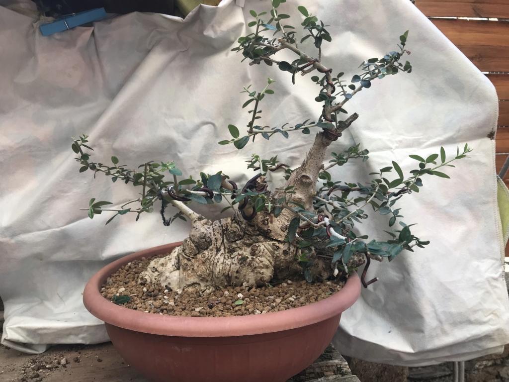 impostazione olivo D3c7fc10