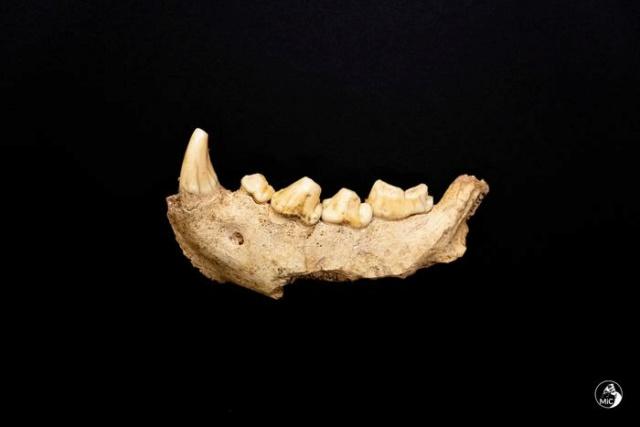 Ritrovati al Circeo i resti di 9 uomini del Neanderthal 6401a310