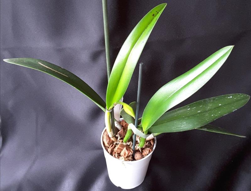 Orchideen-Neuzugang 2 - Seite 15 20190225