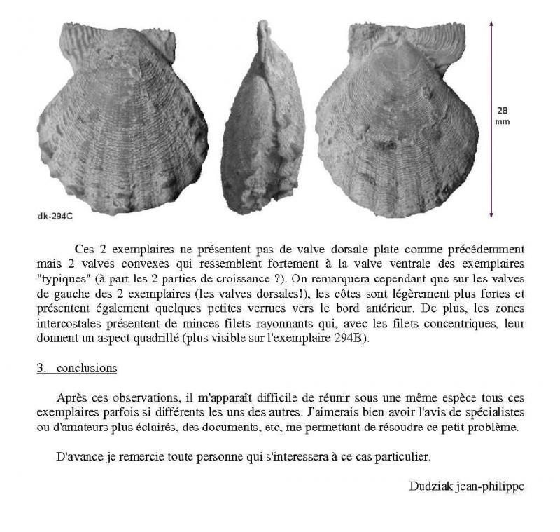 variations chez Radulopecten bathonien luc sur mer Radulo12