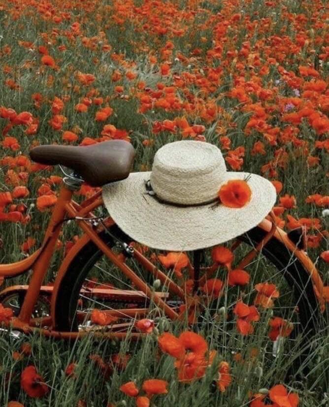 وردة القصور..يا وردتي ❤️❤️❤️ Cef83d10