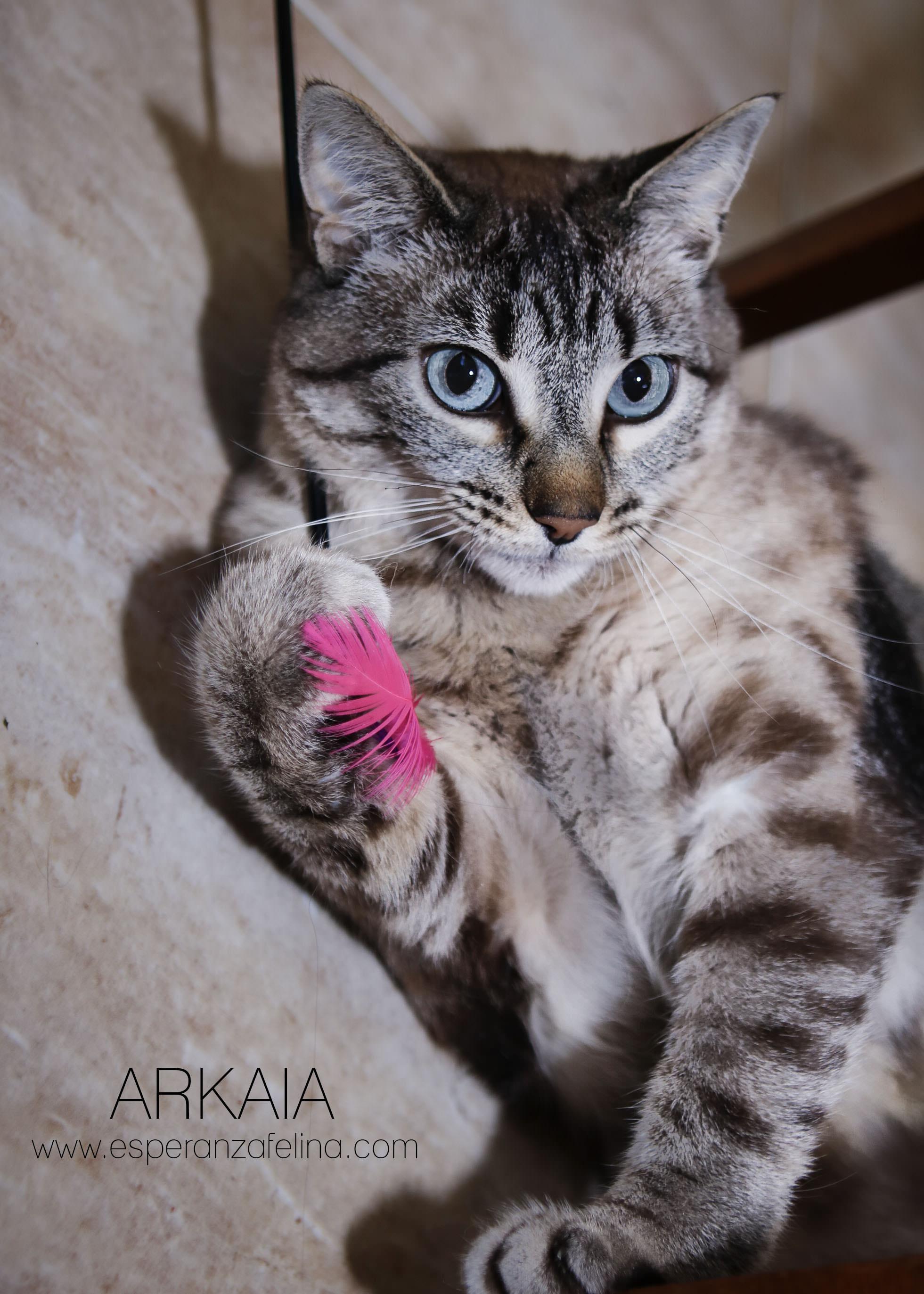ARKAIA, gatita rescatada en la zona de Arkaiate (F.N. aprox: 1/01/2016) Álava Arkaia12