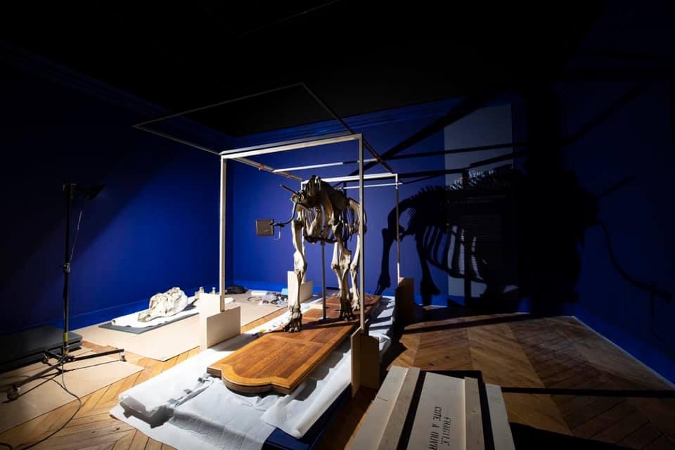 animaux - Exposition Les animaux du roi à Versailles 24337310